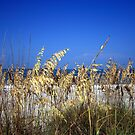 Sea Oats by Virginia N. Fred