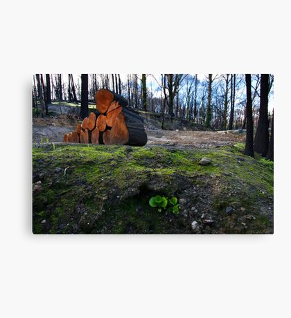 Hope Amidst Destruction Canvas Print