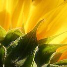 Sunflower by Terri~Lynn Bealle