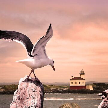 Seagull's Lighthouse by Doty