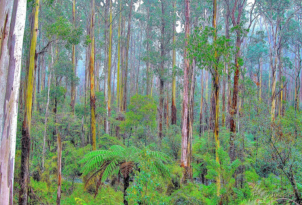 Memories Are Made Of This -Yarra Ranges National Park - The HDR Experience by Philip Johnson