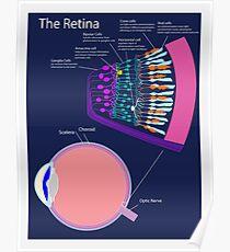 The Retina Poster