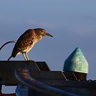 Green Heron Bird by Laura Puglia