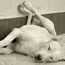 Lazy dog by supermimai