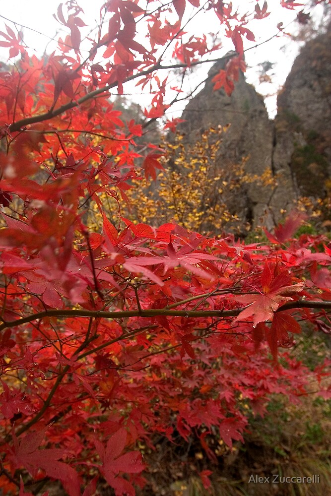 Maple Heaven - Juwangsan National Park, South Korea by Alex Zuccarelli