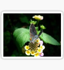 Hairstreak Butterfly Basking Sticker