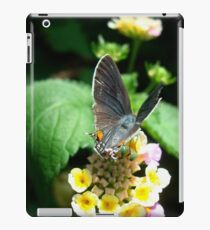 Hairstreak Butterfly Basking iPad Case/Skin
