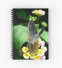 Hairstreak Butterfly Basking Spiral Notebook