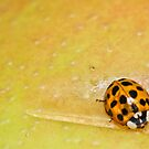 Ladybug's Lunch by IndigoMidnight