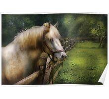 White Stallion Poster