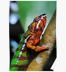 Panther Cameleon Poster