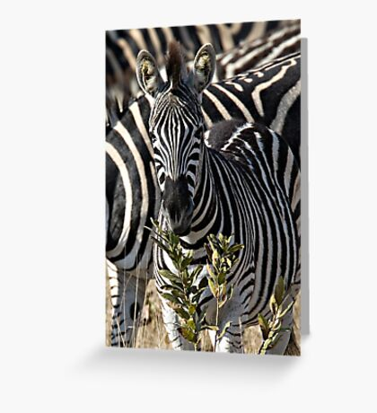Zebra Stripe Confusion Greeting Card