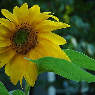 Brand New Bloom by Ainsleyrk