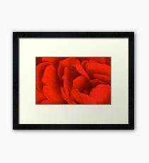 Red Begonia Framed Print