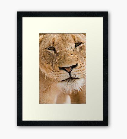 Lioness Close up Framed Print