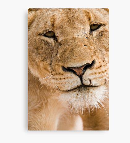 Lioness Close up Canvas Print