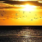 When the morning gulls went to sea by jchanders