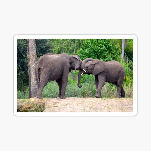 African Elephants Interacting Sticker