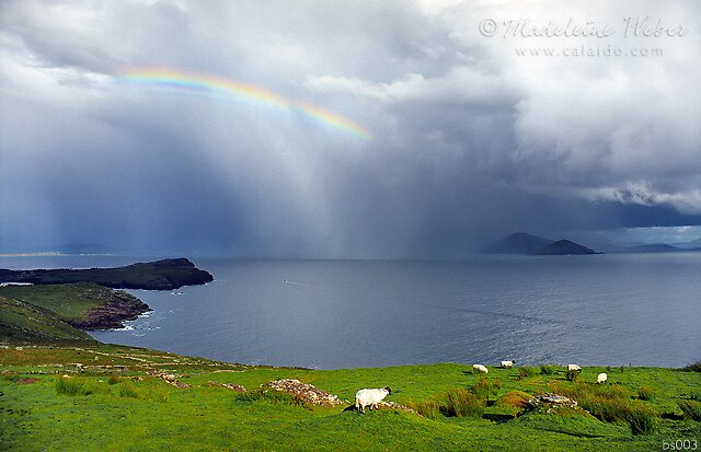 • Kerry, Rainbows, Ship, Sheep and Fields by Madeleine Weber / www.calaido.com by Madeleine  Weber