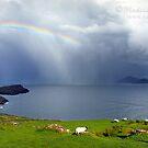 • Kerry, Rainbows, Ship, Sheep and Fields by Madeleine Weber / www.calaido.com by Madeleine  Weber