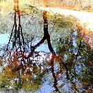 Nature's Mirror by KatarinaSilva
