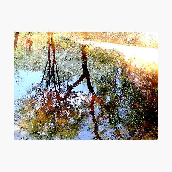 Nature's Mirror Photographic Print