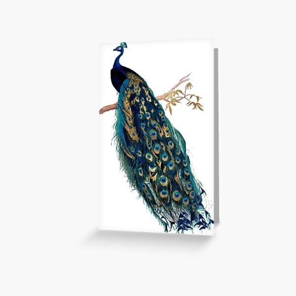 Vintage Peacock  Greeting Card