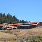 Rusty tin roof by LindaJBazor