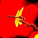 Yellow Wings by JoeGeraci