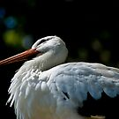 Stork by maileilani