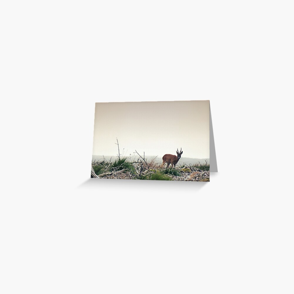 Deer in the Scottish Wilderness Greeting Card
