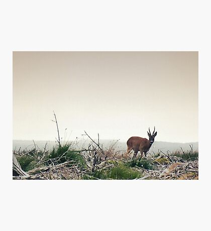 Deer in the Scottish Wilderness Photographic Print