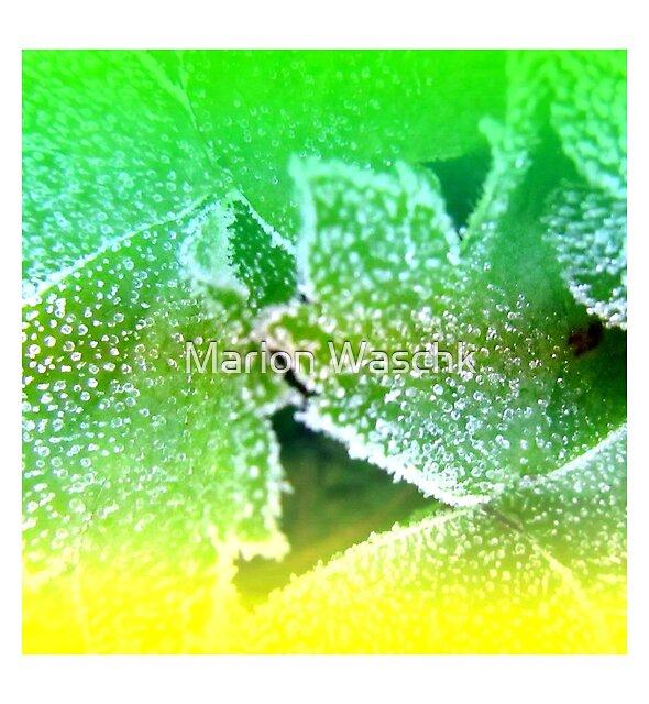 frosty leaves - frostige Blätter MW Art Marion Waschk von Marion Waschk