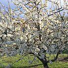 Blossom by David Smith