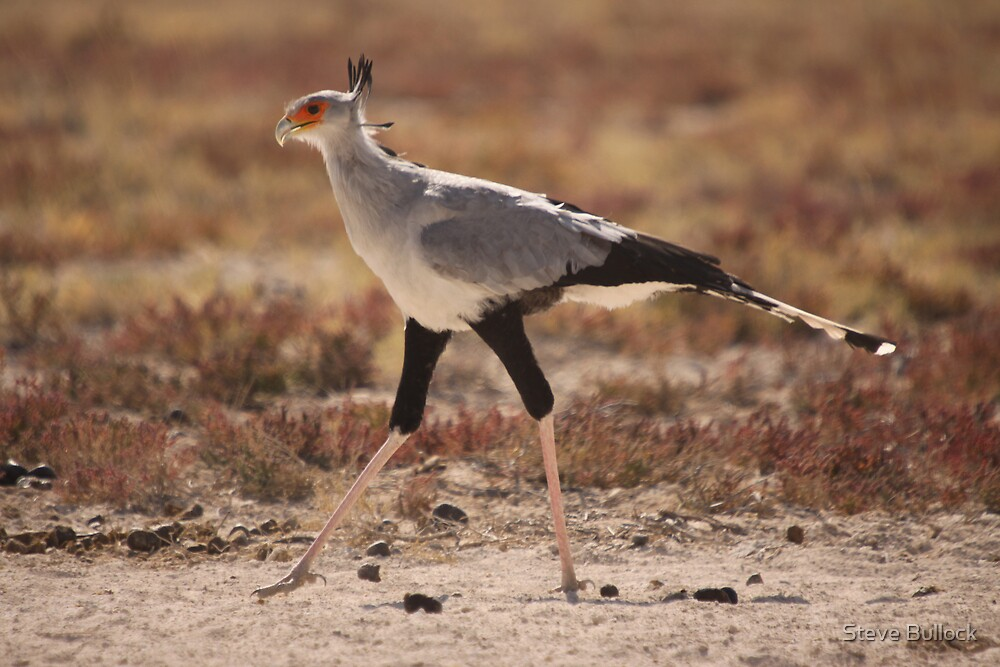 Secretary Bird by Steve Bullock