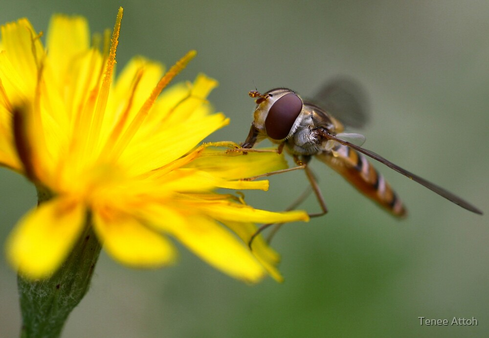 Small Wasp by Tenee Attoh