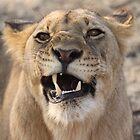Grumpy by Steve Bullock