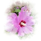Summer Pink Hibiscus by Maria Dryfhout