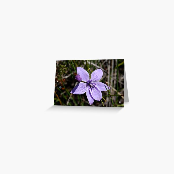 Babe in a Cradle Orchid Greeting Card