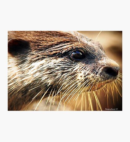 .....By A Whisker... Photographic Print