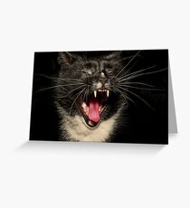 Lolcat Greeting Card