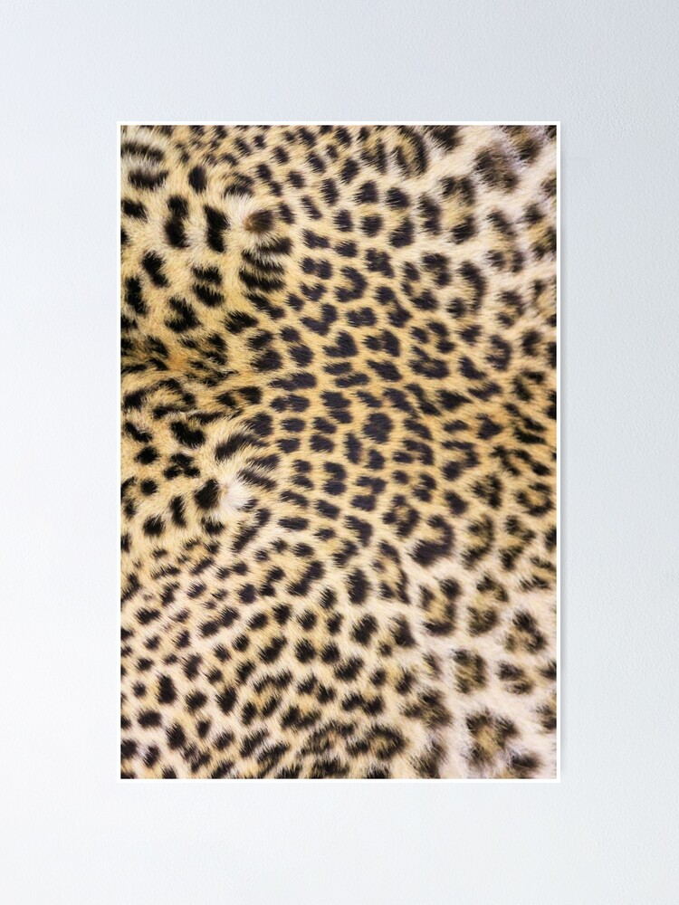 Alternate view of Leopard print Poster