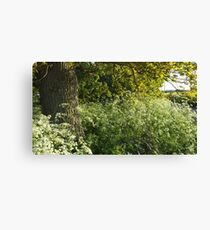Clouds of Cow Parsley Canvas Print