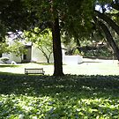 Peaceful bench - Mills College by LindaJBazor