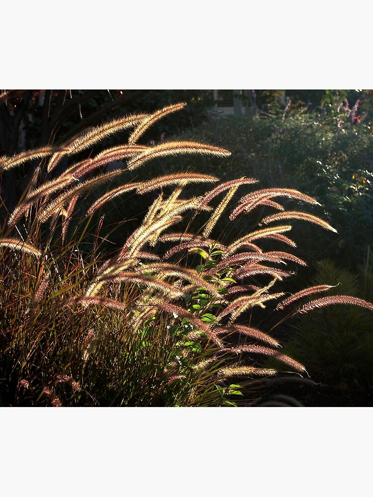 Sunset on the grass from A Gardener's Notebook by douglasewelch