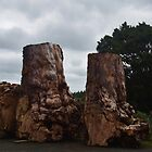 Swamp Kauri  (Agathis australis) by lezvee