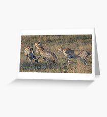Cheetah Males Playing Greeting Card