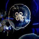Space Jellies by sadeyedartist
