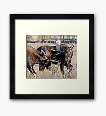 Moose Bulls Sparring Framed Print
