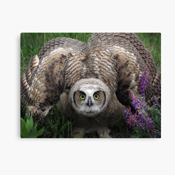 I'm Really HUGE Canvas Print